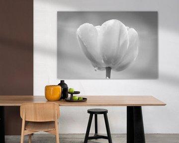Tulpe mit Regentropfen von Wendy Tellier - Vastenhouw
