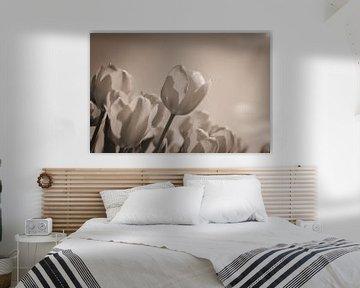 Tulpenfeld von Wendy Tellier - Vastenhouw