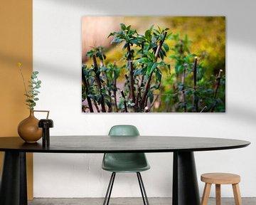 Jonge groene plant von Maarten Langenhuijsen