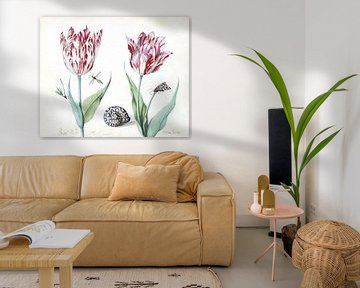 Zwei Tulpen mit Schnecke, Motte und zwei Insekten, Jacob Marrel