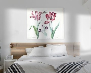 Zwei Tulpen mit Pelargonien und Insekten, Jacob Marrel