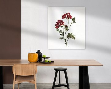 Rote Blume, M. de Gijselaar