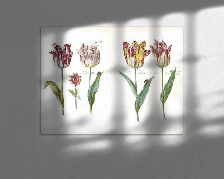 Beispiel: Blatt aus einem Tulpenbuch, Jacob Marrel