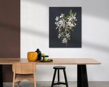Zweig einer blühenden Azalee, M. de Gijselaar