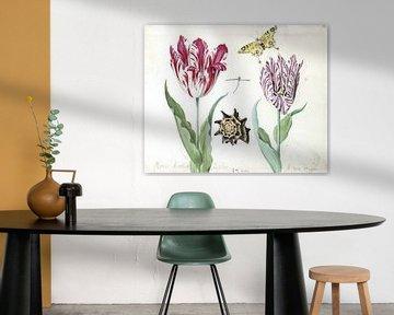 Zwei Tulpen mit Muschel, Libelle und Schmetterling, Jacob Marrel