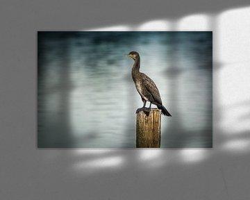 Op de uitkijk van Koen Boelrijk Photography