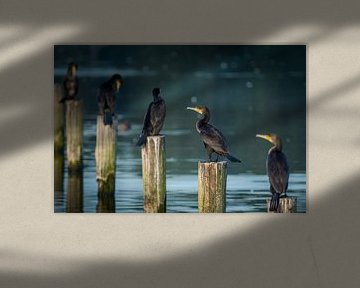 In einer Reihe von Koen Boelrijk Photography