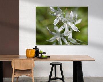Witte bloemen von Ronald Smits