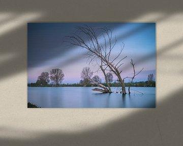 Dode boom in het water von Jan van der Vlies