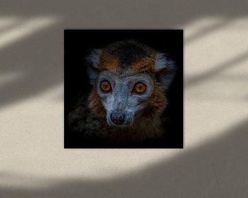 Dark Animal Portrait van kroonmaki von Ron Meijer Photo-Art