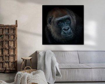 Dark Animal Portait gorilla von Ron Meijer Photo-Art