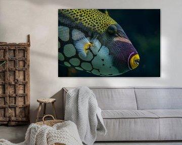 Tropische vis von Ron Meijer Photo-Art