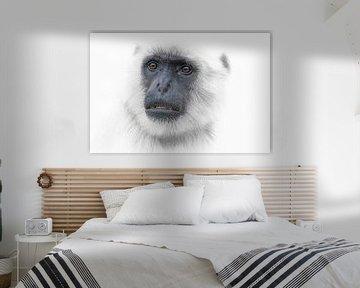 White Animal Portrait von Ron Meijer Photo-Art