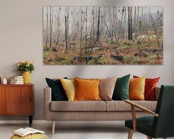 Verstorbener Wald in Kanada, Richard Friese