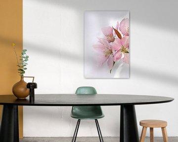 Roze appelbloesem von Noortje Muller