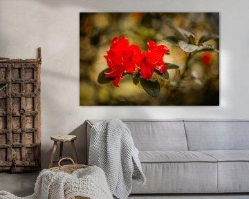 Rhododendren Mönchengladbach von Nicolas Lebeau
