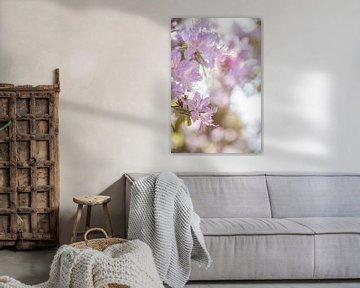 Weißer Rhododendron Mönchengladbach van Nicolas Lebeau