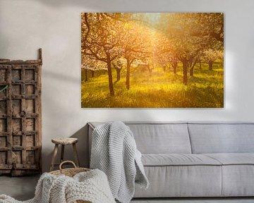 """"""" Bloemdroom """" Appelboomgaard in de zonsondergang van Jiri Viehmann"""