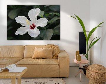 Close up van een mooie witte bloem von Clicksby JB