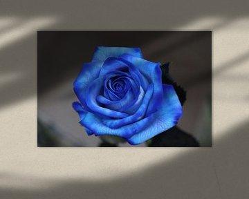 Blue rose von Clicksby JB
