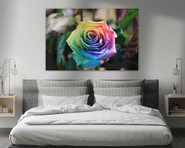Regenboog kleurige roos von Clicksby JB
