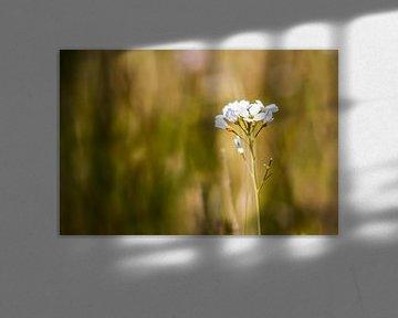 In 't veld von Fotostudio 075