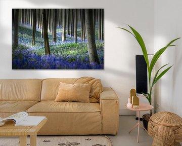 Hyacinth Dream van Rob Visser