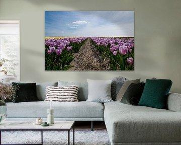 tulpenveld van Kristof Ven