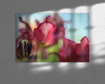 Tulip Art by Deez Tulpen in Nederland van Desiree Adam-Vaassen