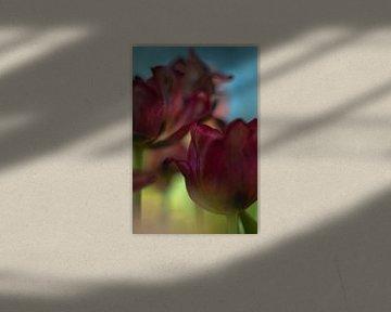 Tulip Art by Deez Tulpen in Nederland von Desiree Adam-Vaassen