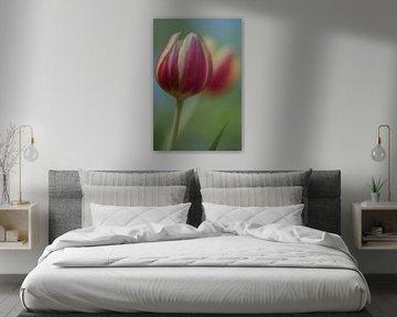 Tulip Art by Deez - Tulpen in Nederland van Desiree Adam-Vaassen