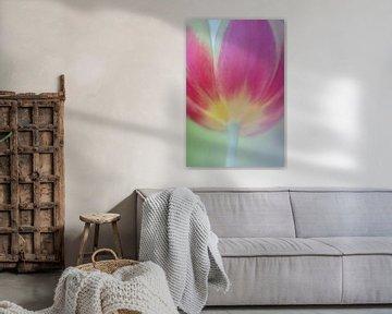 Tulip Art by Deez, Tulpen in Nederland van Desiree Adam-Vaassen