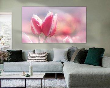 Tulpen von Carolina Roepers
