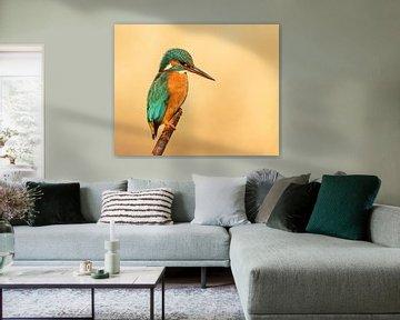 Eisvogel von Vincent Willems
