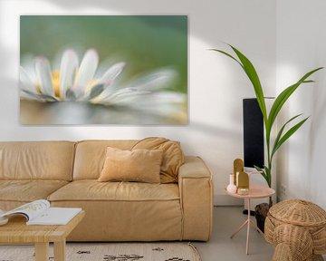 Gänseblümchen von Hennie Zeij