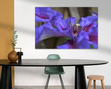 Zijaanzicht van de paarse Clematis van DoDiLa Foto's