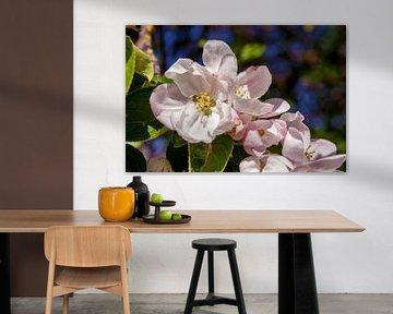 Concept flora : Apple blossoms von Michael Nägele