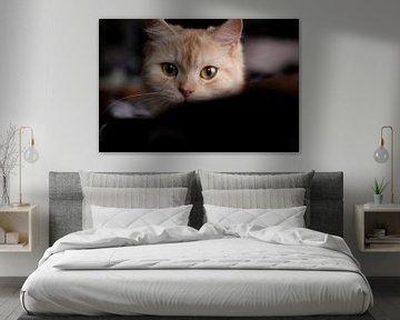 Katten portret von Maxime Jaarsveld