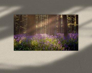Het magische bos von Edwin Mooijaart