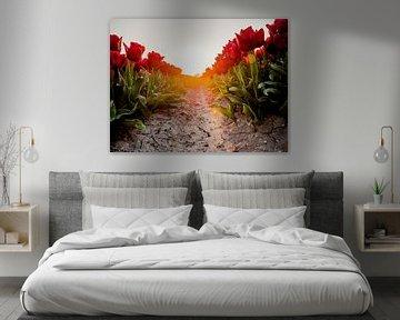 Un chemin de tulipes rouges