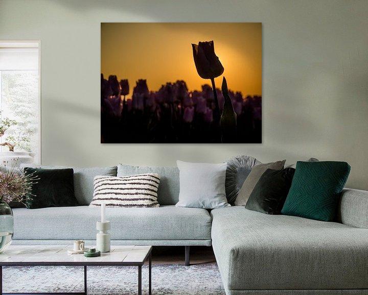 Beispiel: Eine Tulpe mit Hintergrundbeleuchtung von Martijn Tilroe