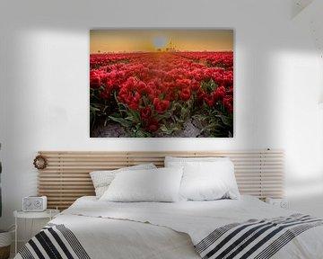 Un champ de tulipes rouges avec rétro-éclairage