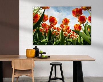 Oranje Tulpen tegen de Hemel von Brian Morgan