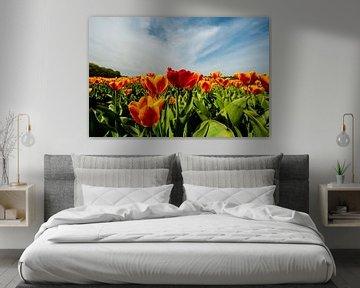 Tulpen in de weide in Nederland von Brian Morgan