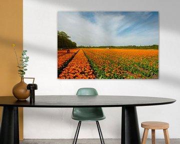 Tulpenveld in Holland. von Brian Morgan