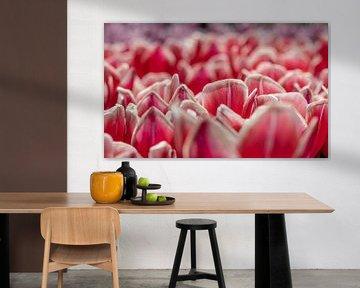 bloemen veld von Gert Slagmolen