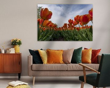 tulpen veld von Gert Slagmolen