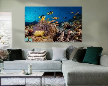 Koraalrif met zwarte en zwartvin anemoonvissen van victor van bochove