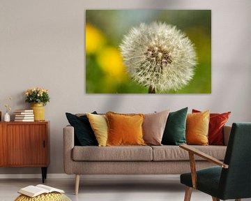 Pardenbloem in bloei von Arie Jan van Termeij