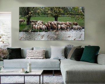 Durstige junge Stiere von Ingrid Aanen